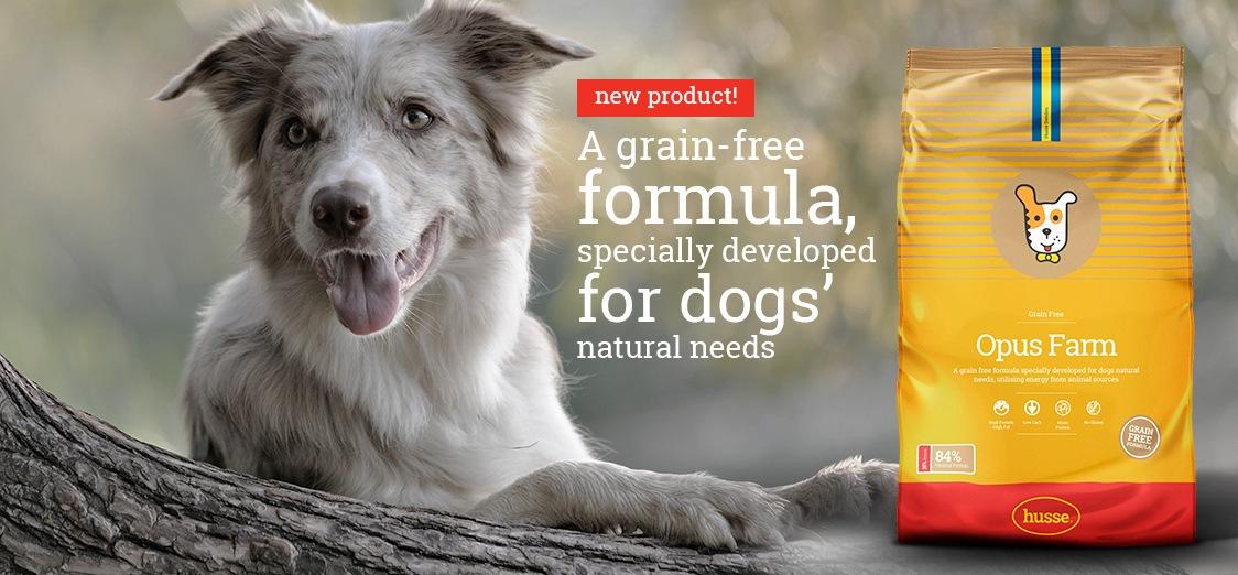 dog-husse-food