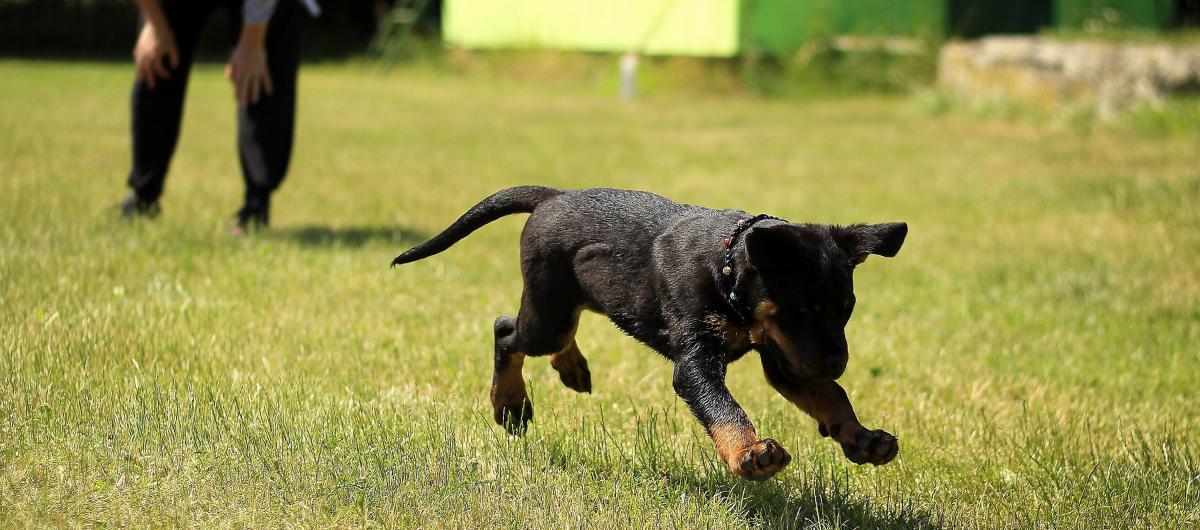 Qu'est-ce que le poids de forme d'un chien ?