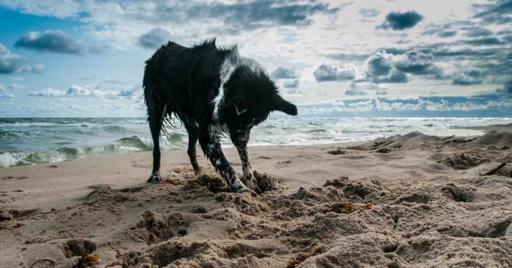 Pourquoi mon chien creuse ?