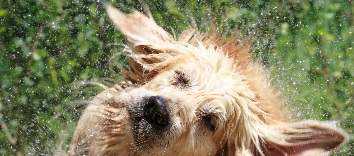 Nos conseils pour rafraîchir votre chien cet été