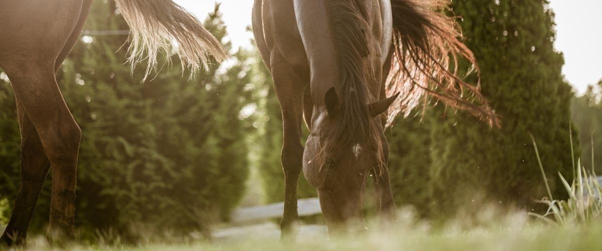 Prendre soin de son cheval au printemps