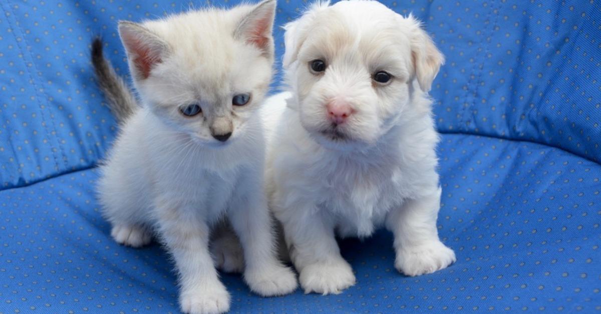 1 - Chiffres clés, statut, questions à se poser, où acquérir un animal?