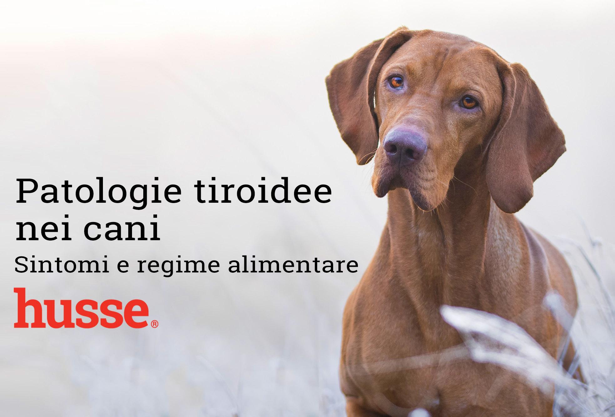 Patologie tiroidee nei cani
