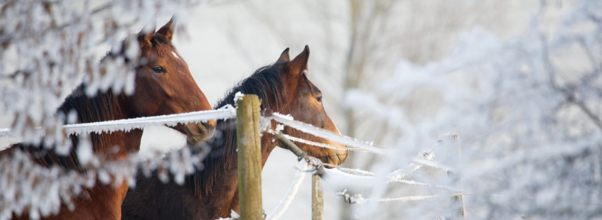 Prendre soin de son cheval en hiver
