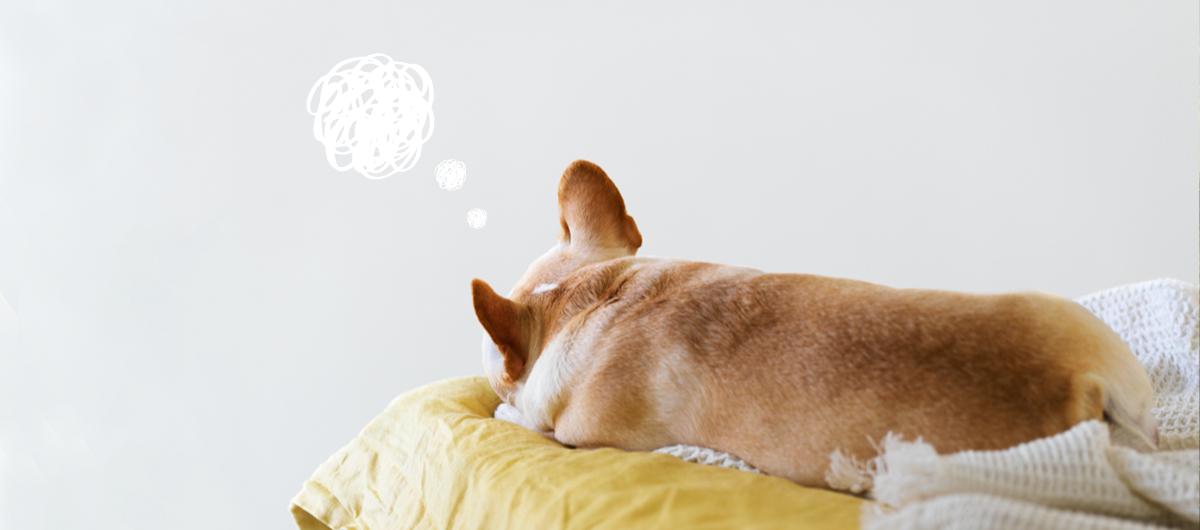 Pourquoi mon chien est anxieux au retour des vacances ?