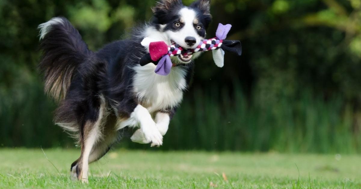 Activités physiques du chien