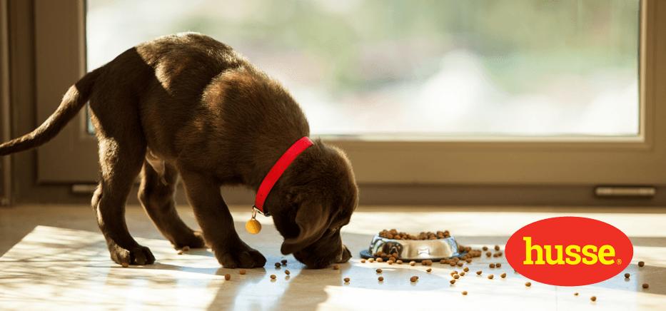 Bien nourrir pour bien grandir : chiot