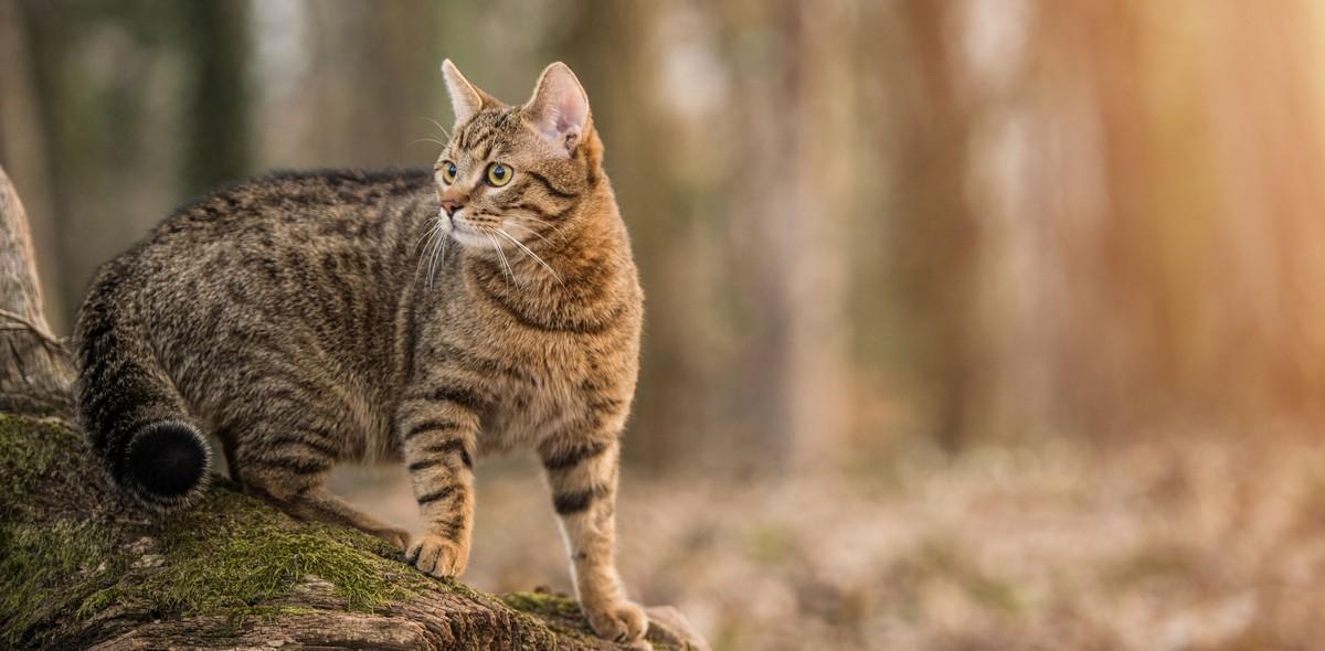 Alimentazione del gatto in autunno