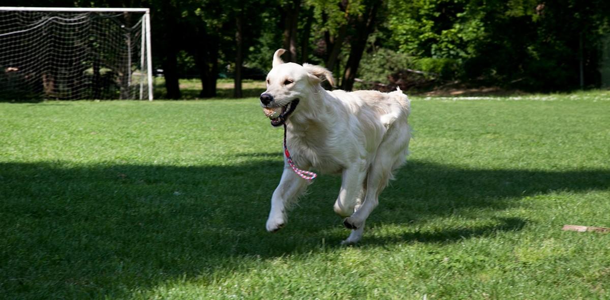 Rinforzare articolazioni cane