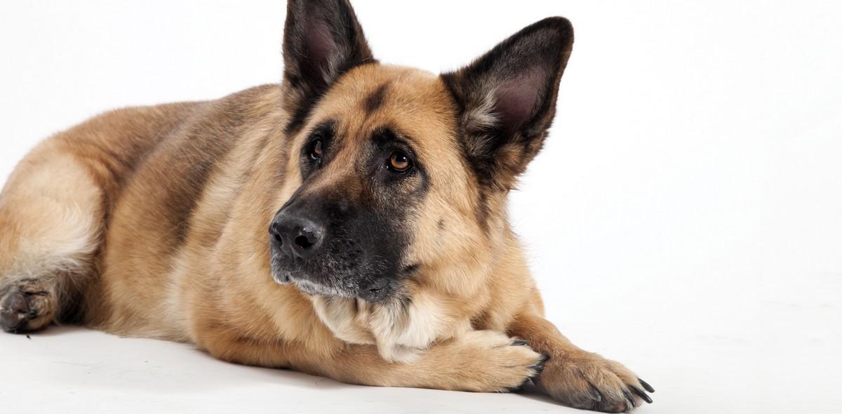 Cure cane vecchio