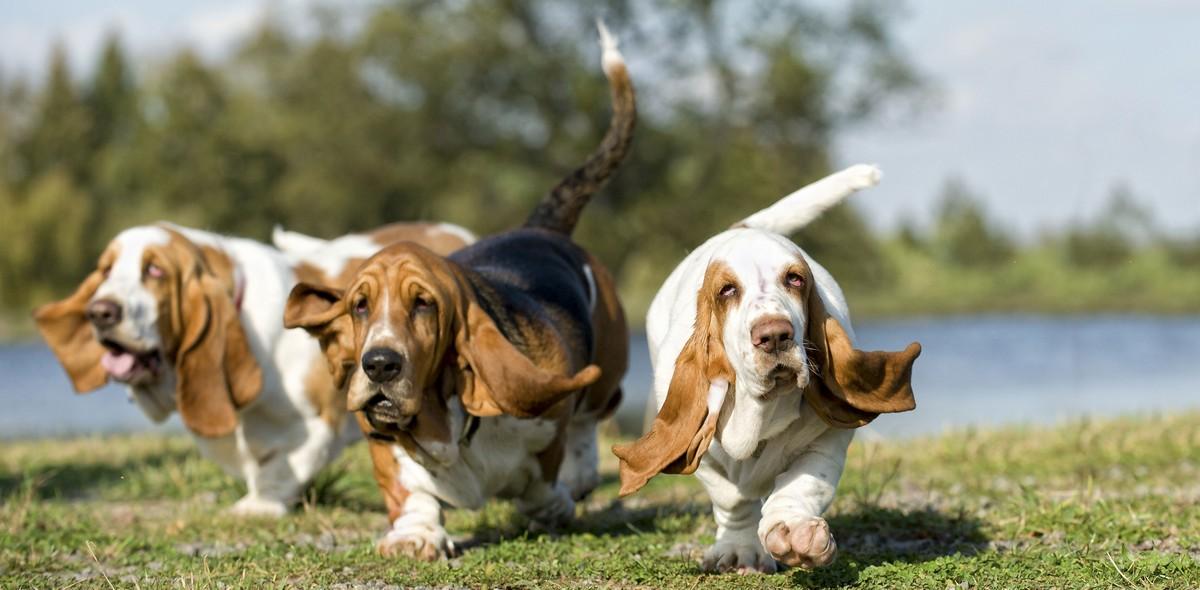 Cane e peso forma: come capire il peso ideale del tuo cane