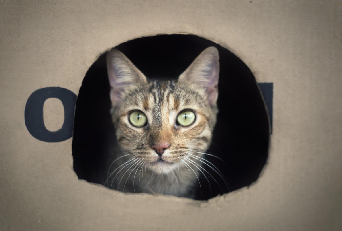 Pourquoi mon chat aime les cartons, sacs, boîtes ?