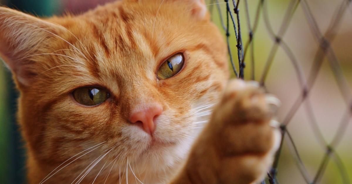 Pourquoi mon chat est craintif, anxieux ? Comment l'aider ?