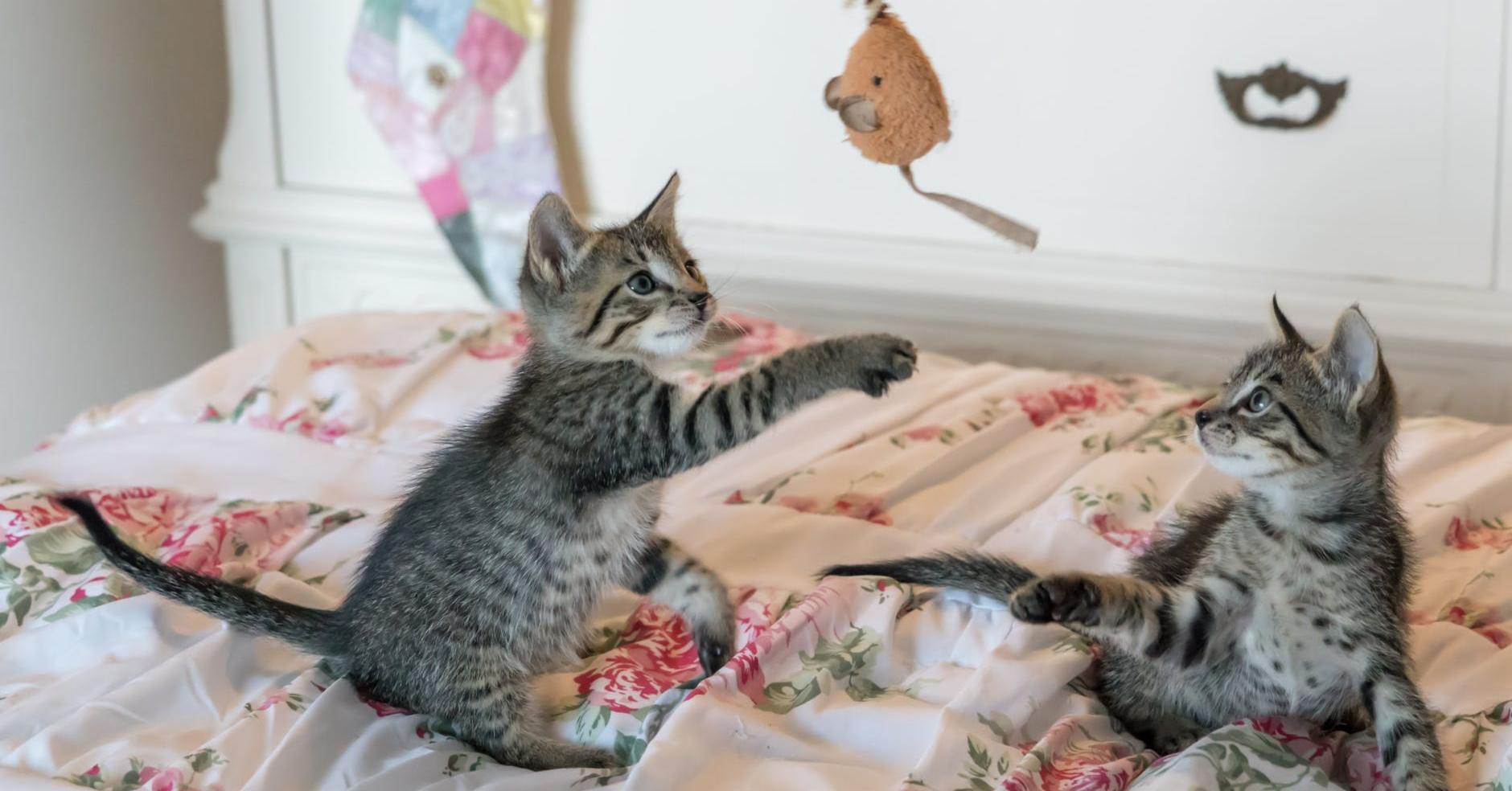 L'intérêt du jeu pour le chat et idées jouets