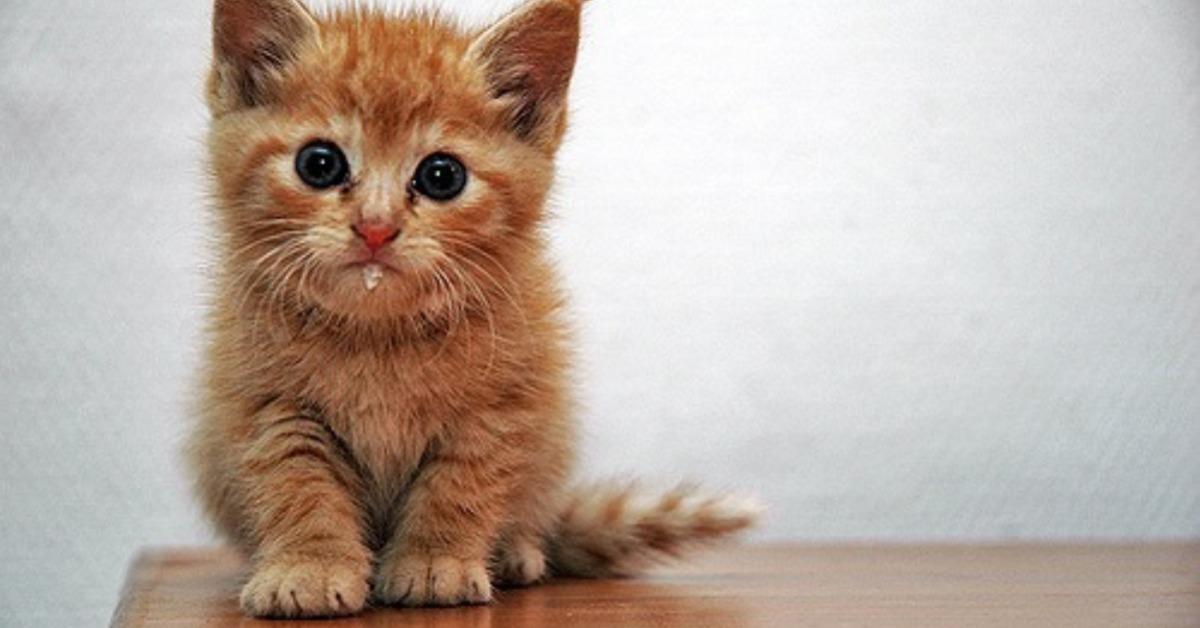 Les grands apprentissages du chaton