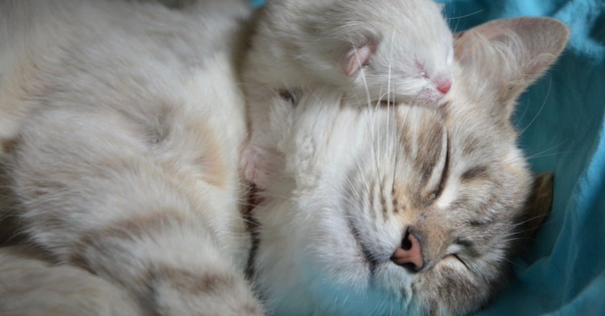 Les problèmes de santé du chaton