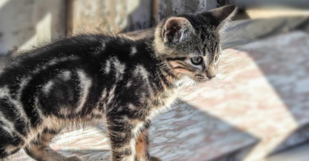 Hygiène du chaton