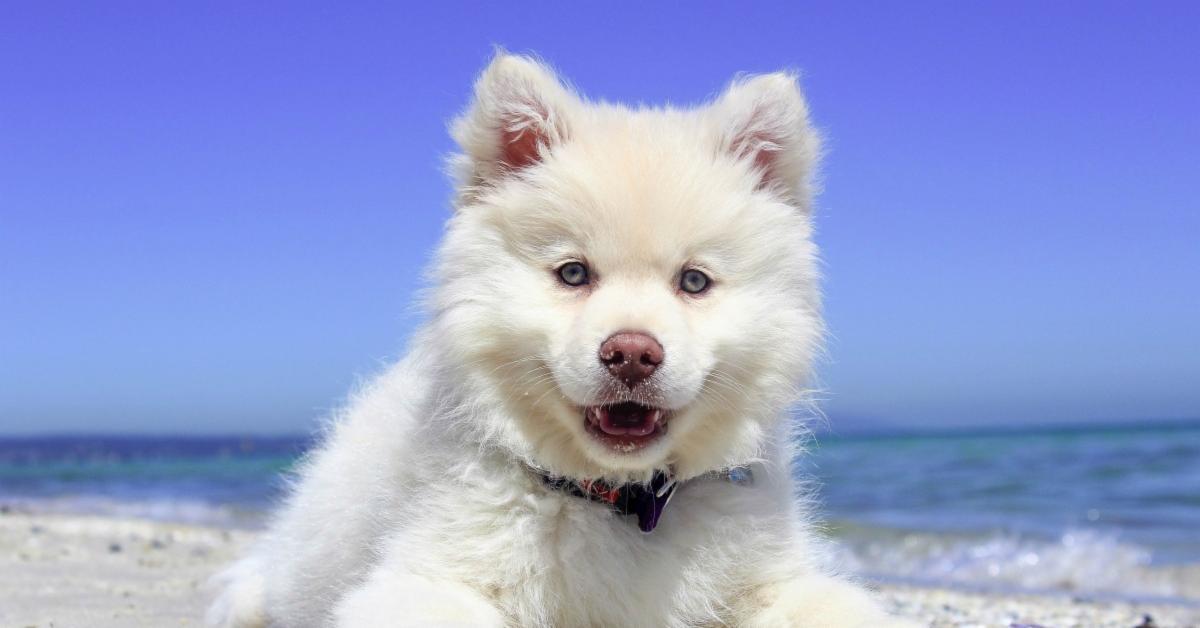 Mon chien en été