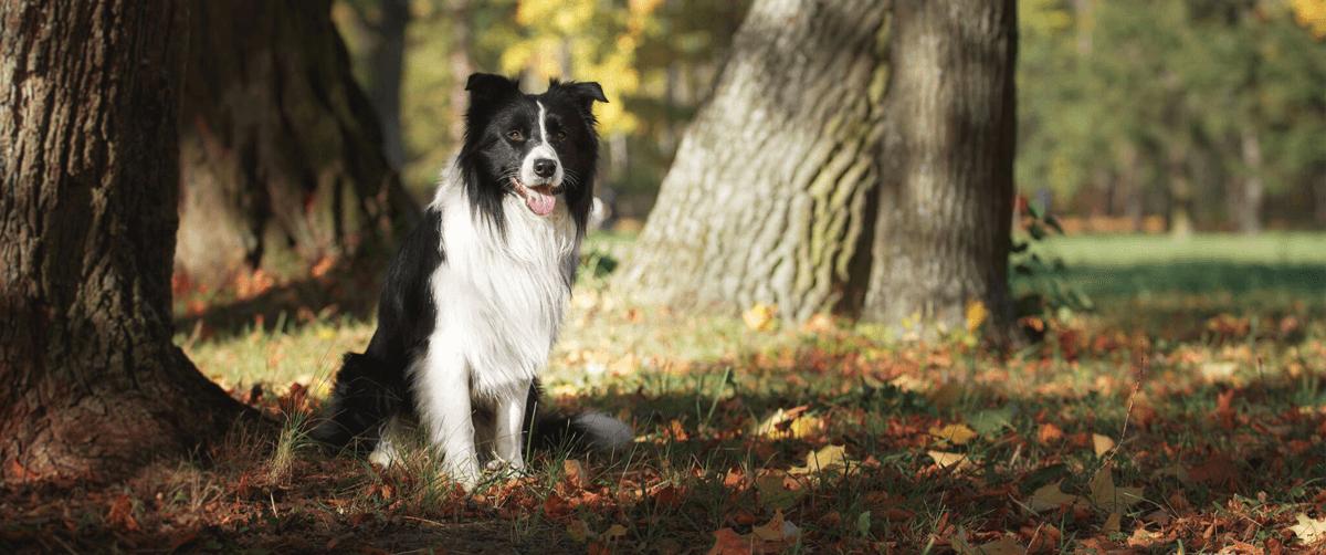 Préparer l'automne avec son animal