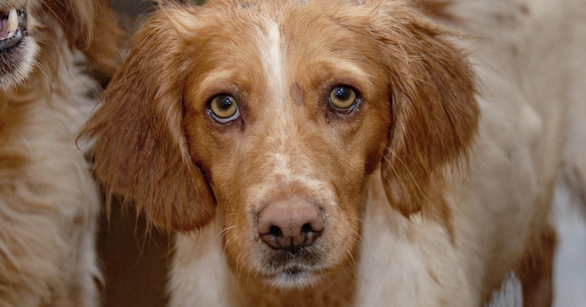 Mon chien a les yeux qui coulent