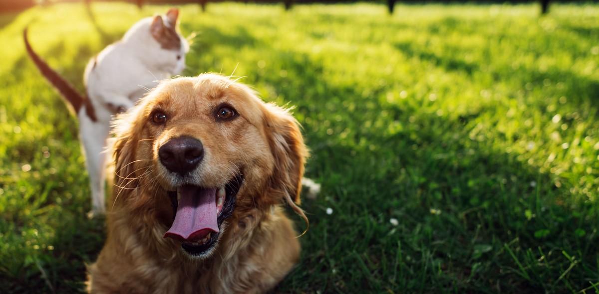 Colpo di calore Gatti e Cani