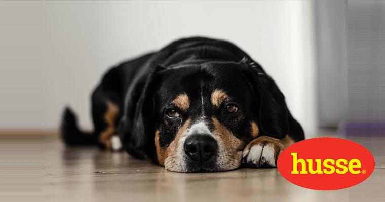 Comportement alimentaire chez le chien