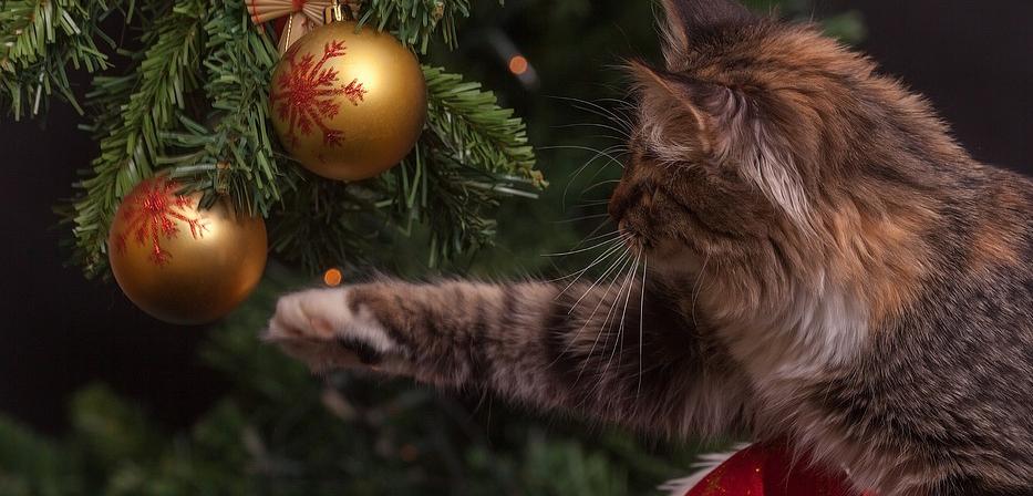 Dangers Noël chiens et chats