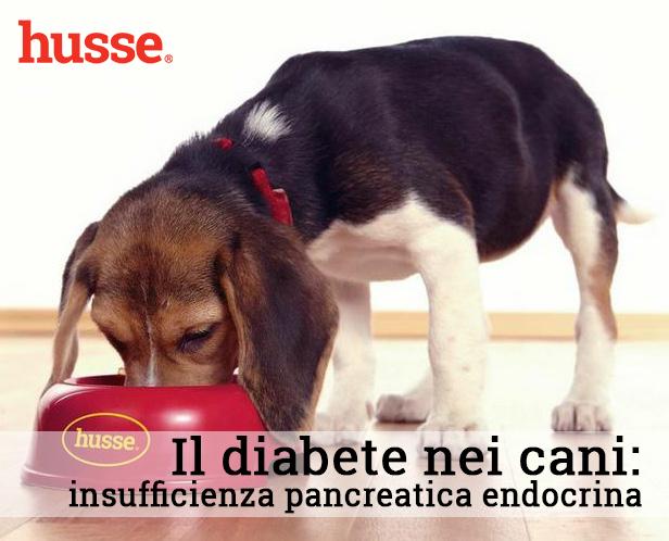 Insufficienza pancreatica endrocrina: il diabete nei cani