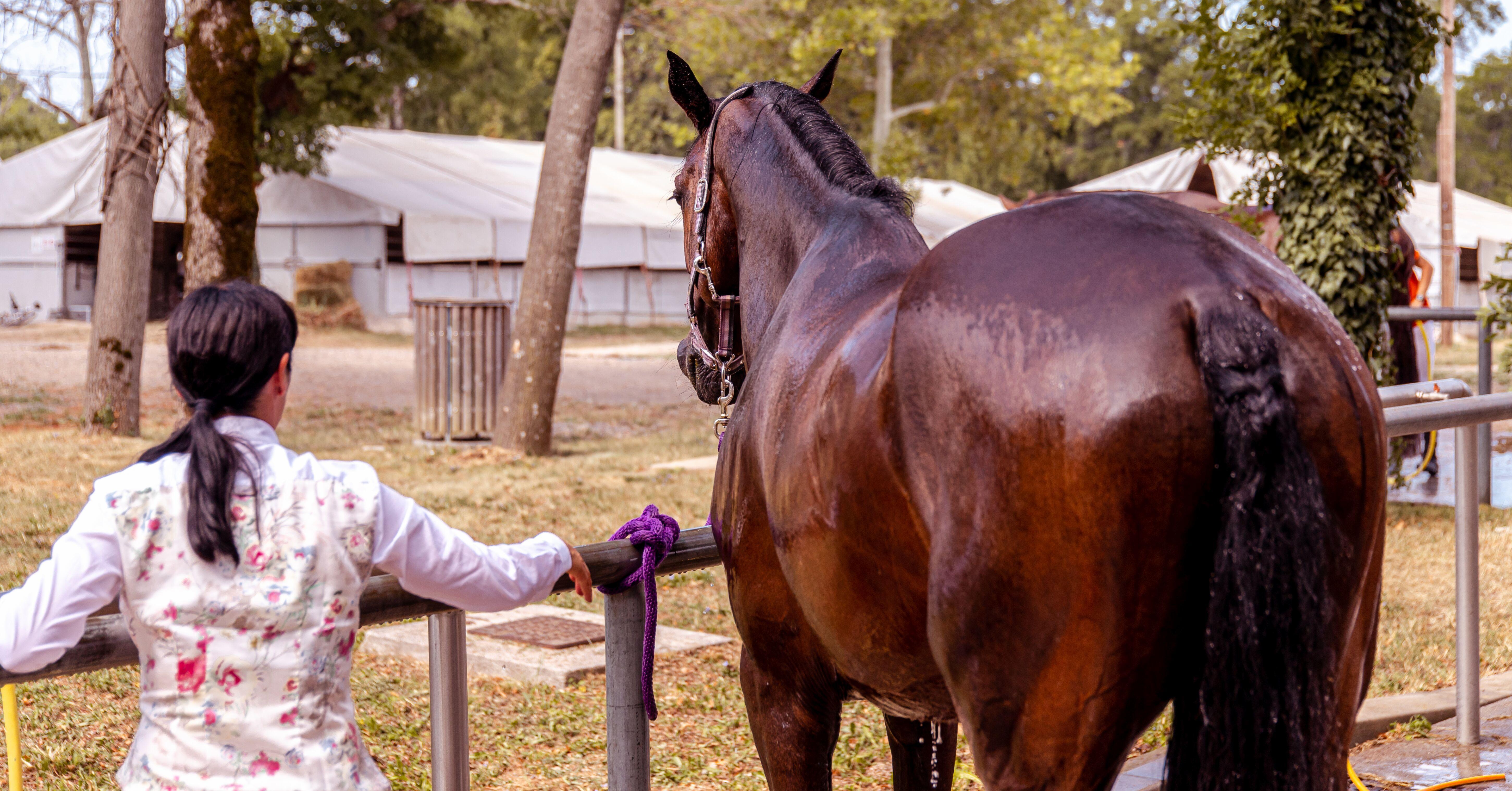 Digestion et système digestif du cheval