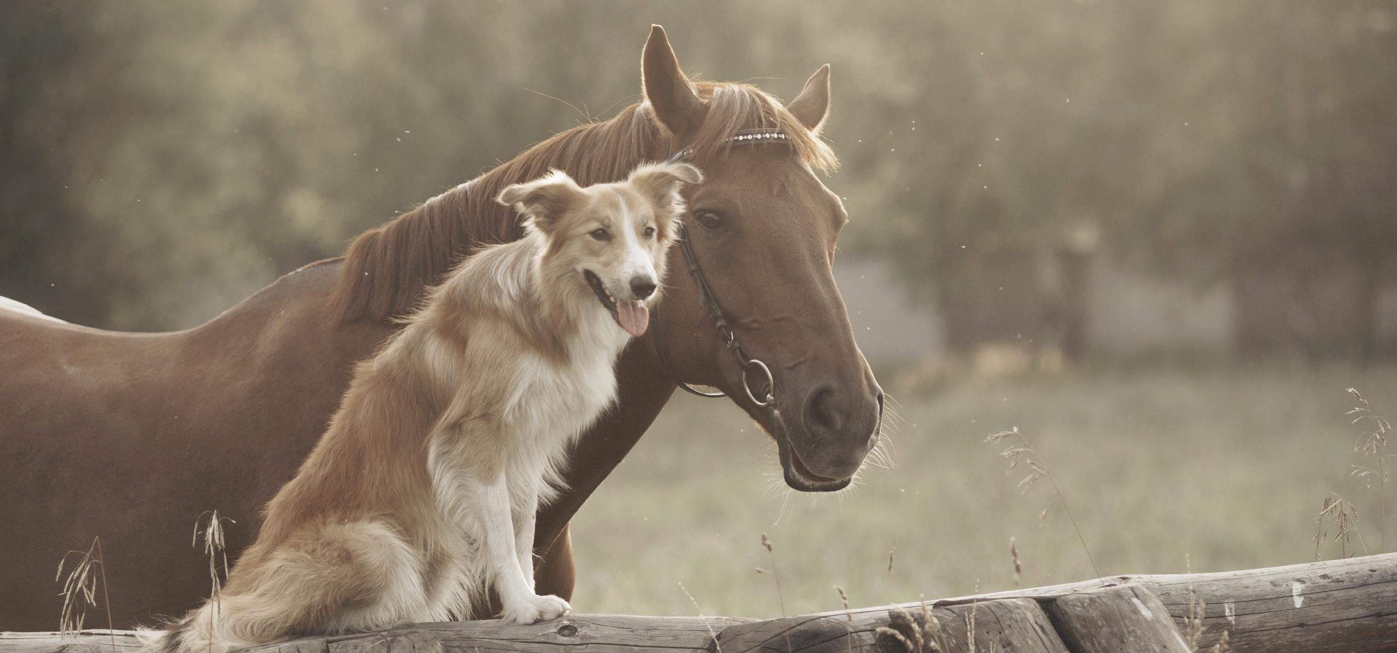 Crème cicatrisante pour chiens et équidés