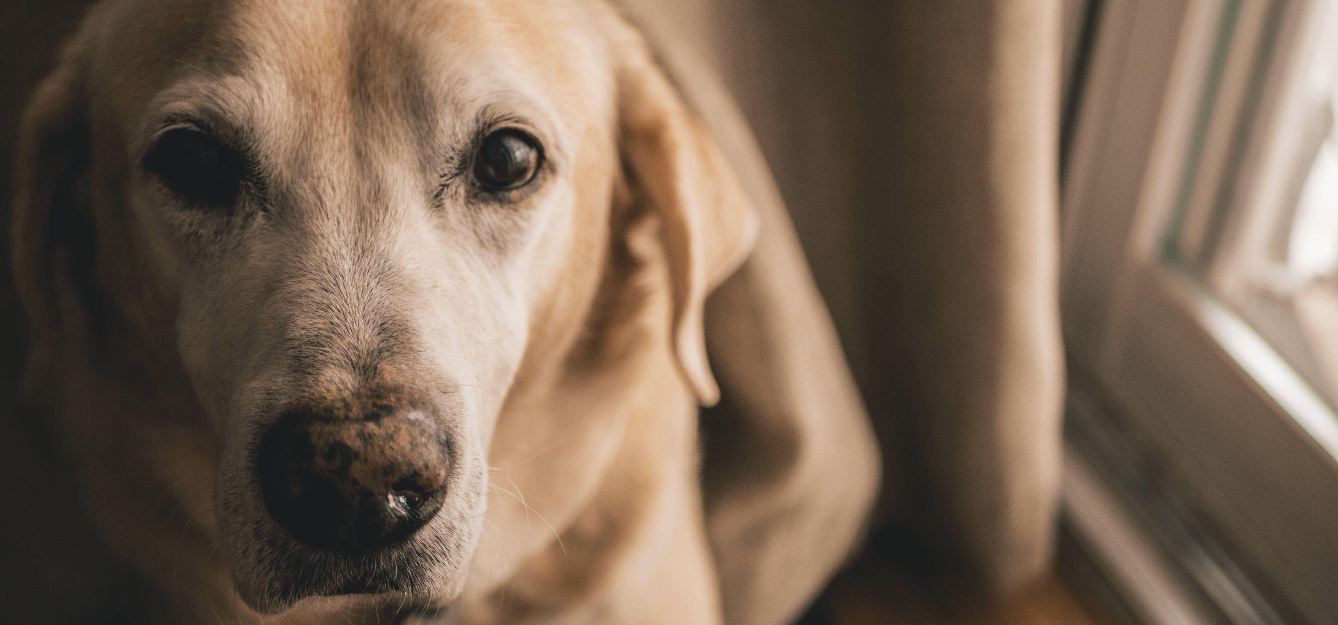 Intoxication ménagère du chien