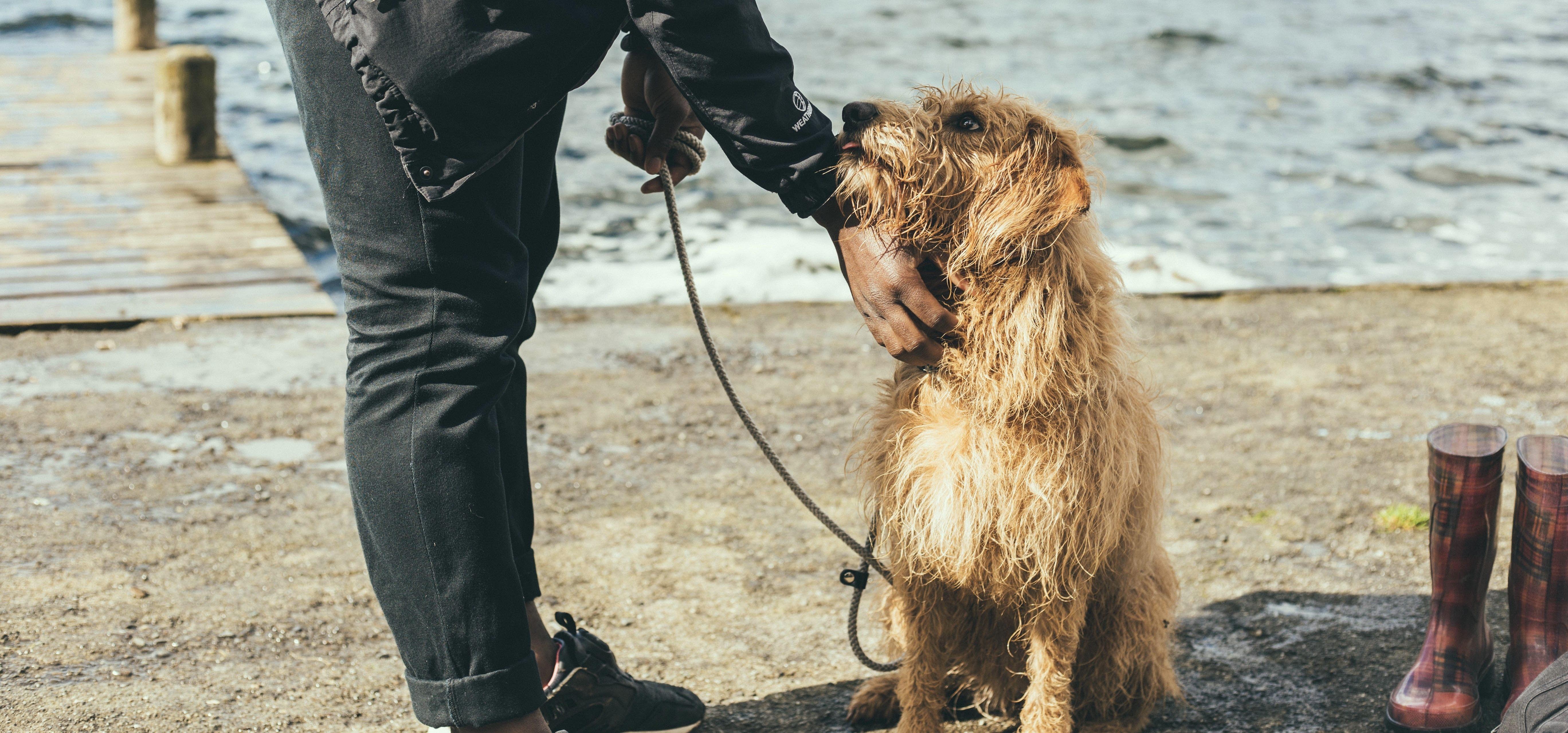 La démodécie du chien