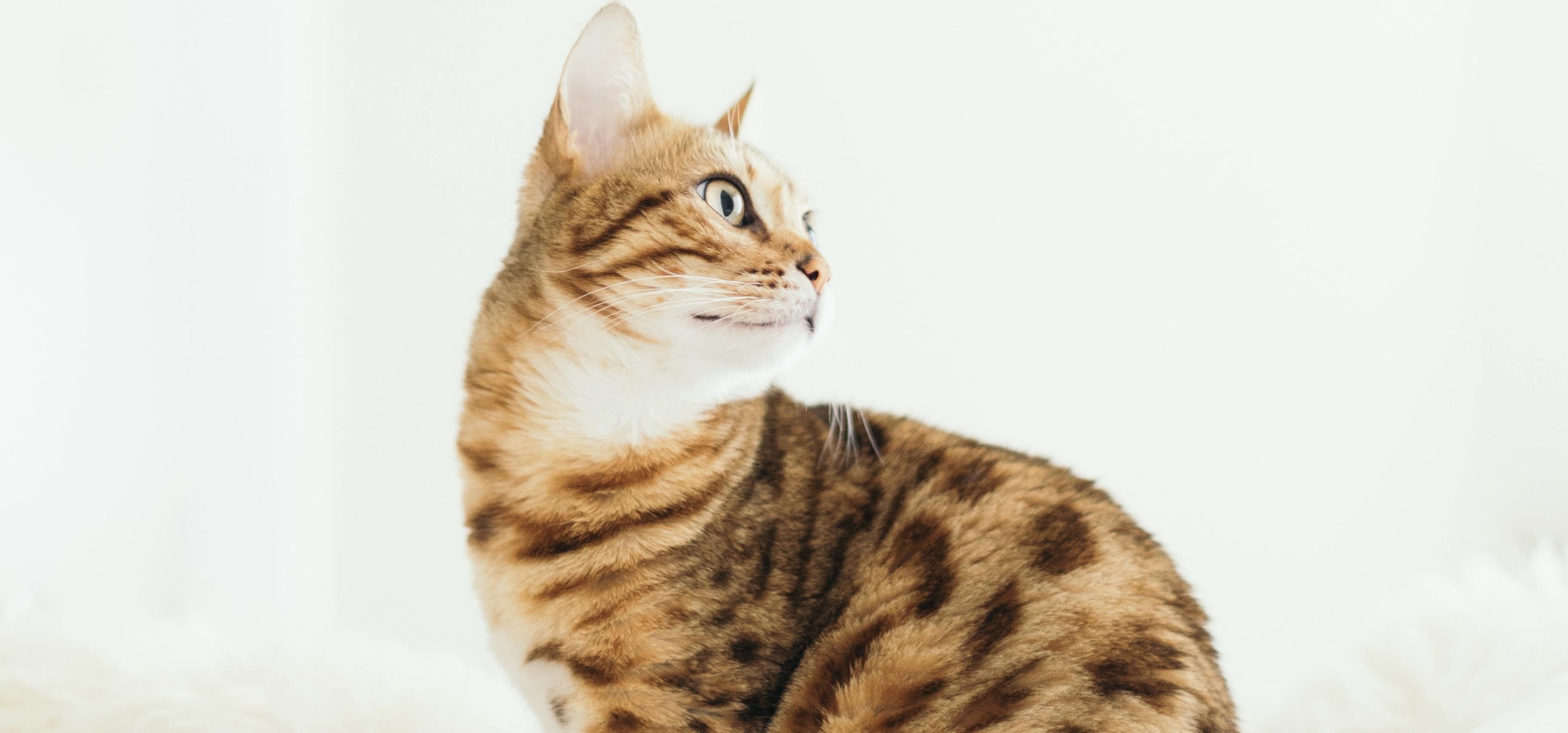 Les 5 sens du chat