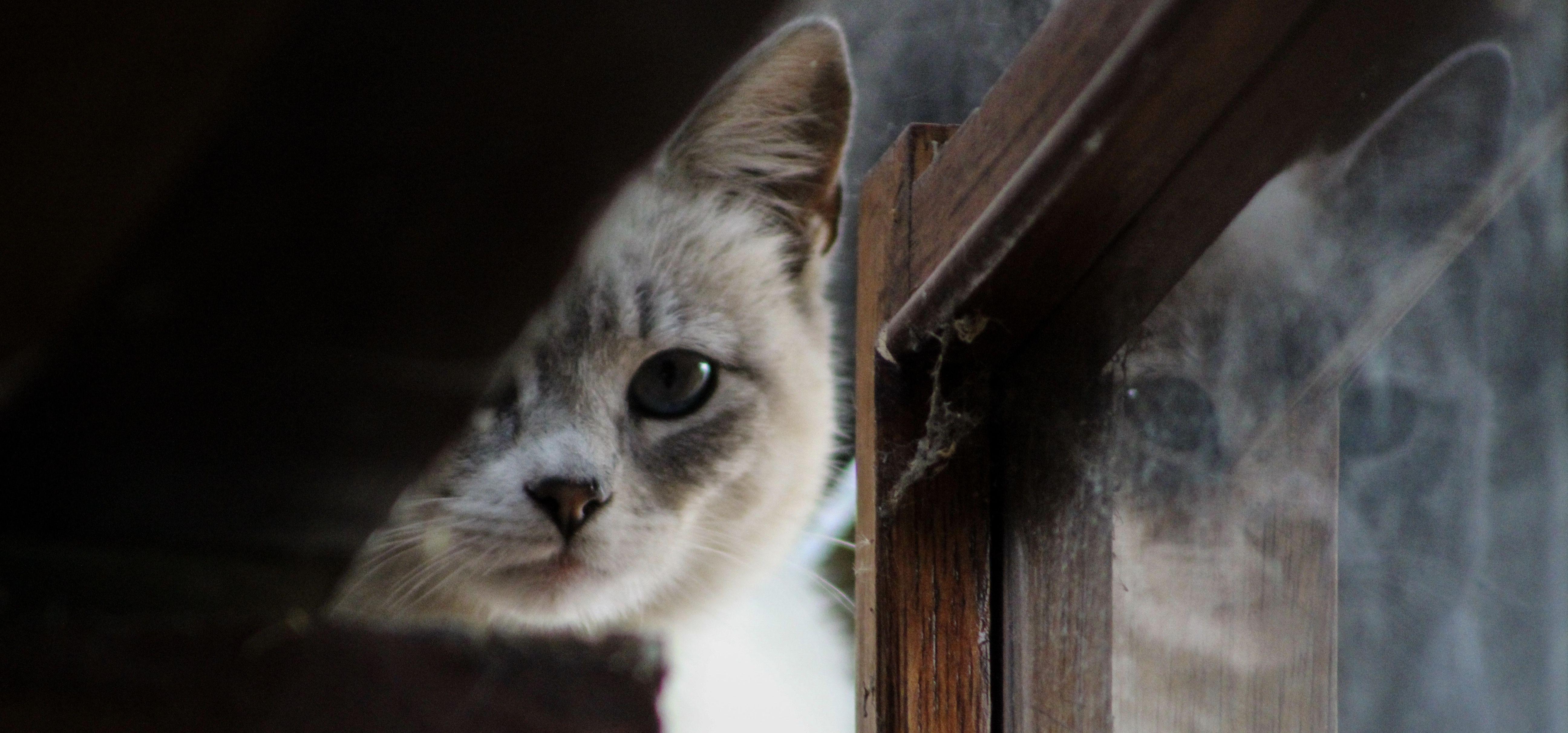Stress et vacances chez le chat