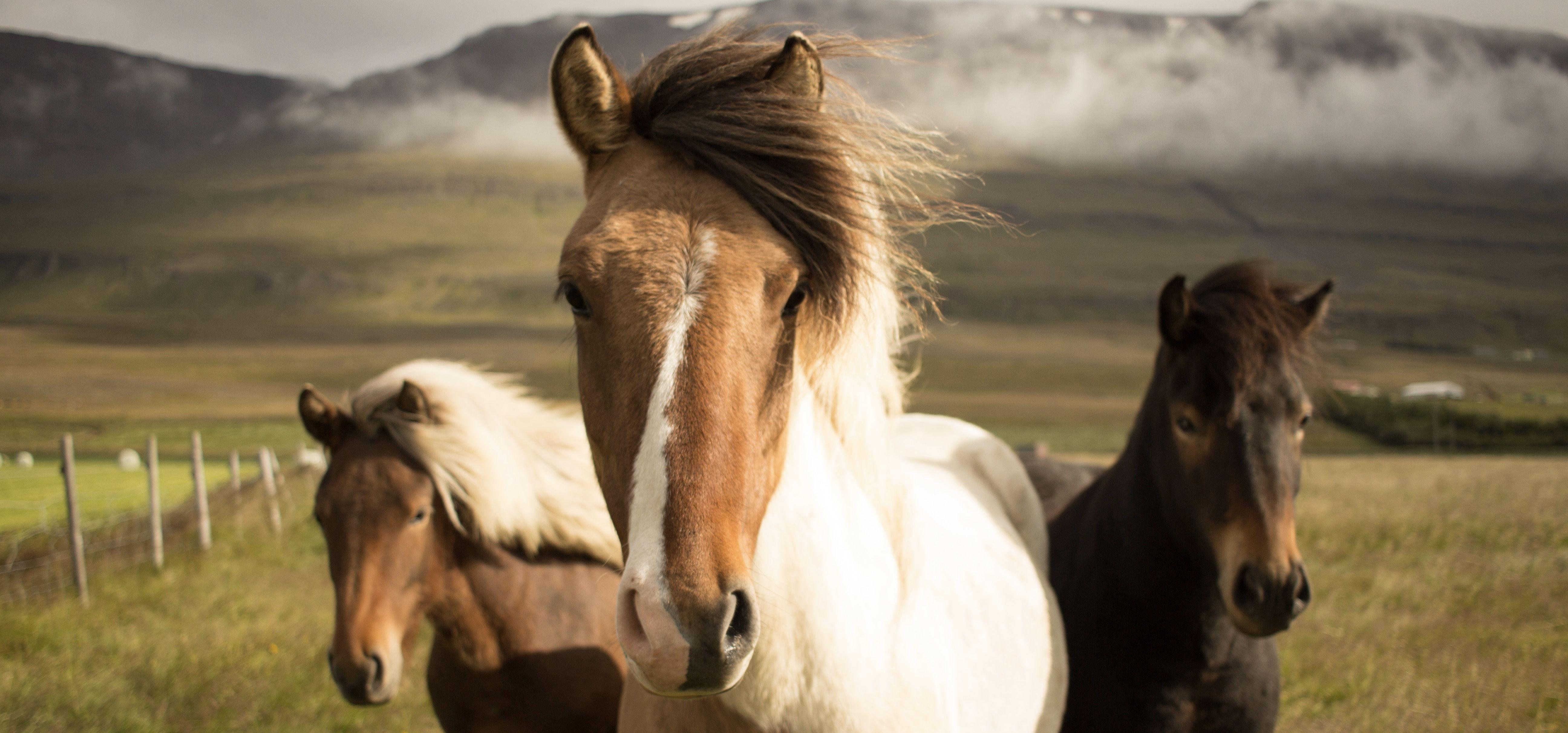 Les anti-insectes pour chevaux