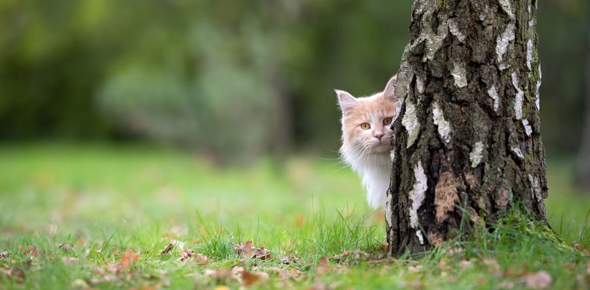 Il gatto in vacanza: 7 consigli utili per viaggiare col tuo micio