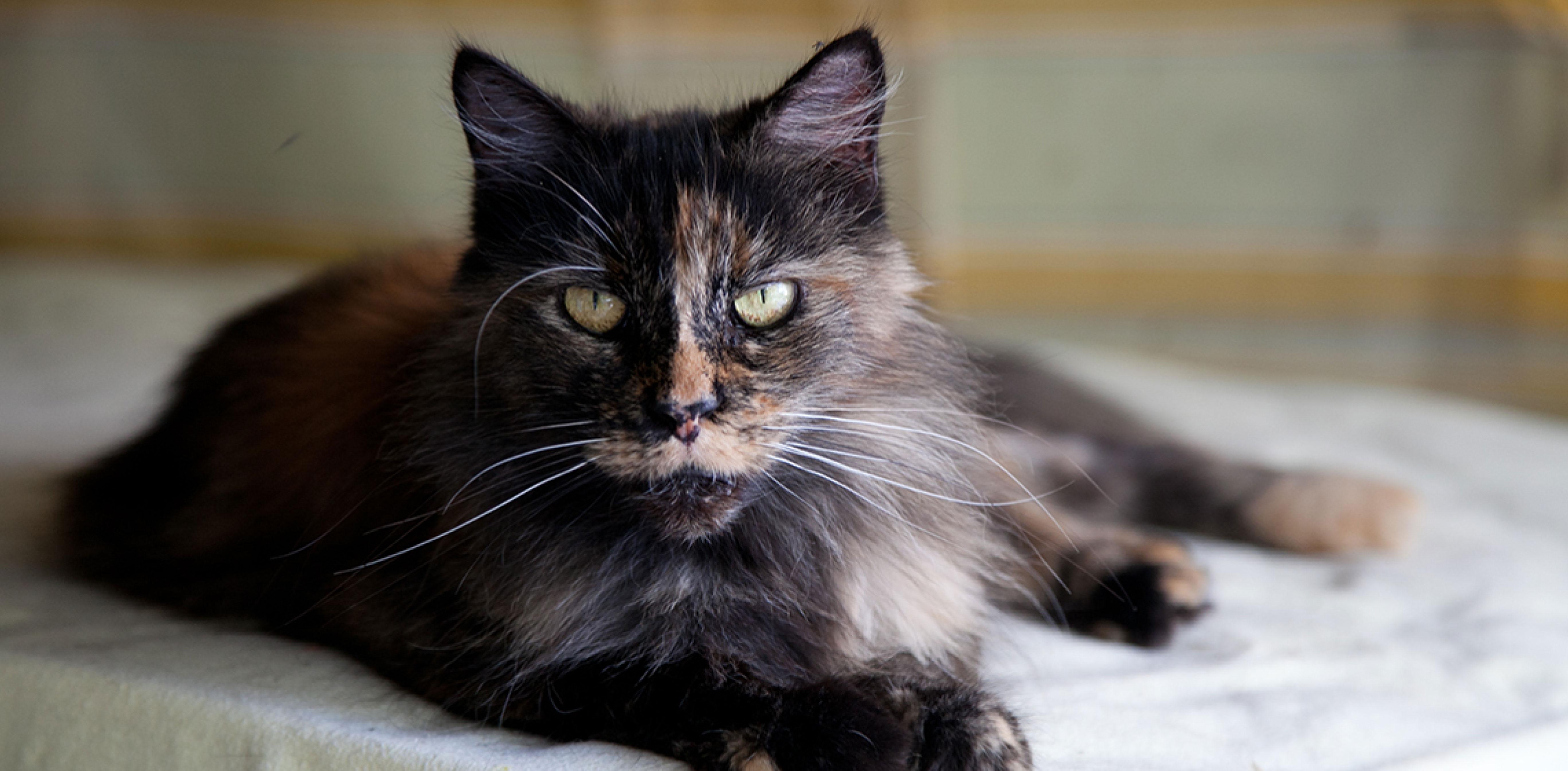 Cure gatto vecchio