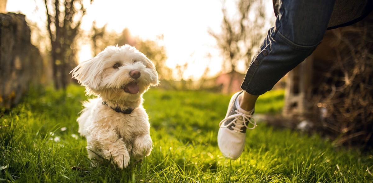 Pulci e non solo: guida ai parassiti esterni del tuo animale