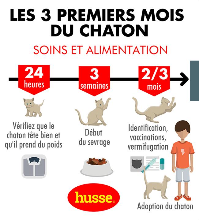 Les besoins du chaton de la naissance à 3 mois