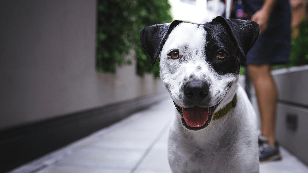 Le langage corporel du chien