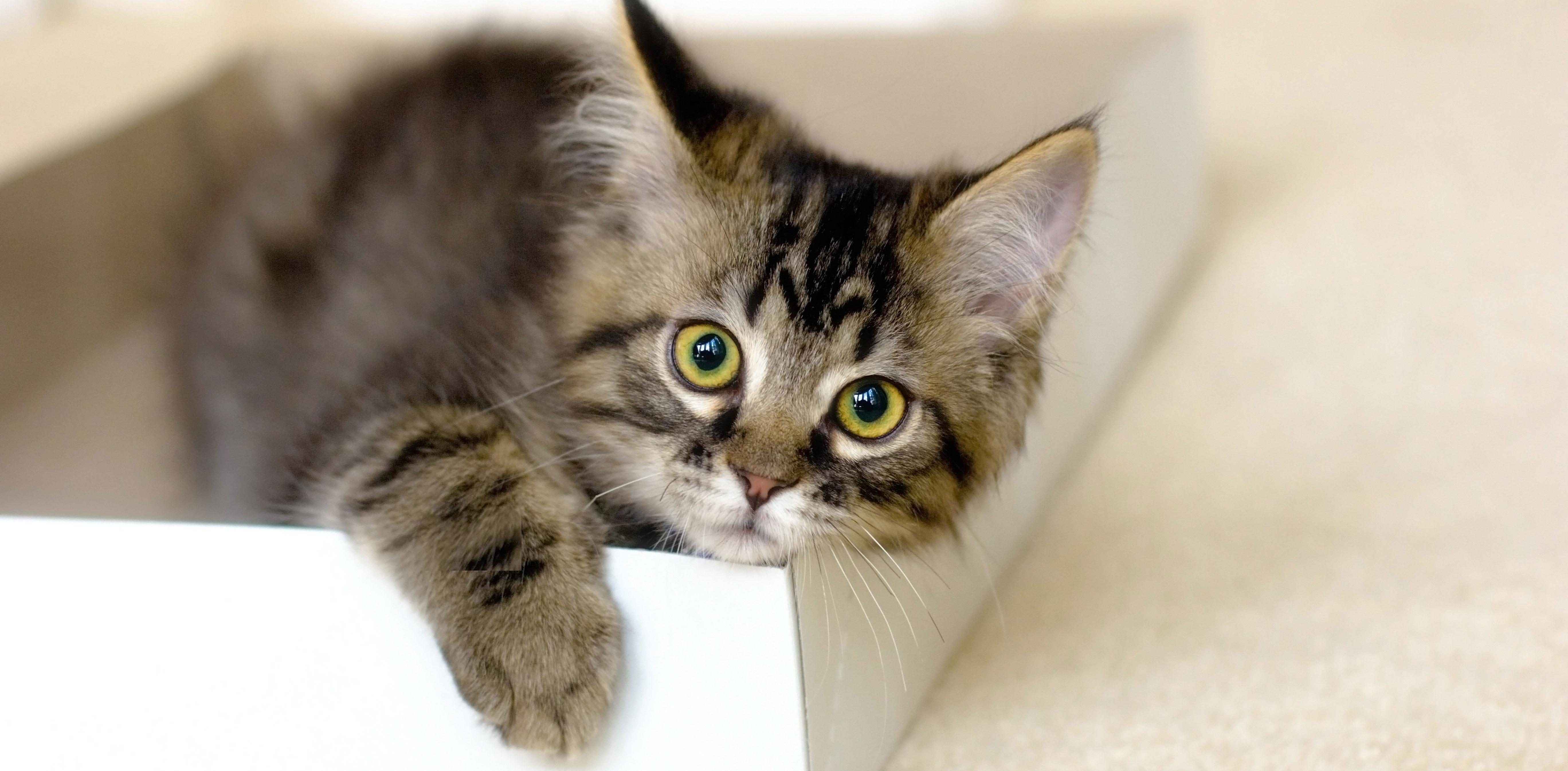 Lettiera Micio: il Pellets per la felicità del tuo gatto