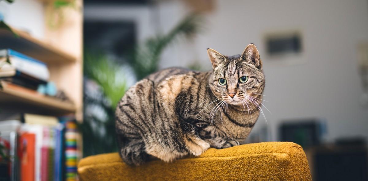 Quali malattie possono essere trasmesse dai gatti?