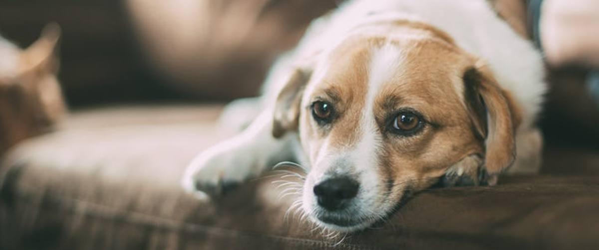 Comment occuper son chien pendant une absence