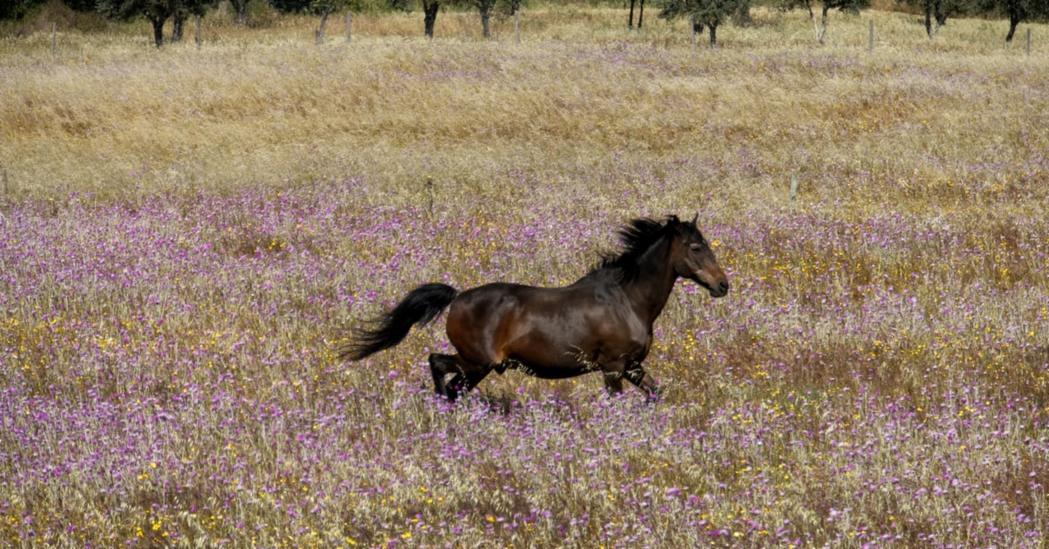 Phytothérapie et cheval