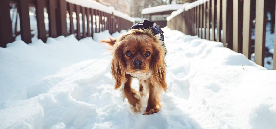 Précaution hiver selon l'habitat du chien