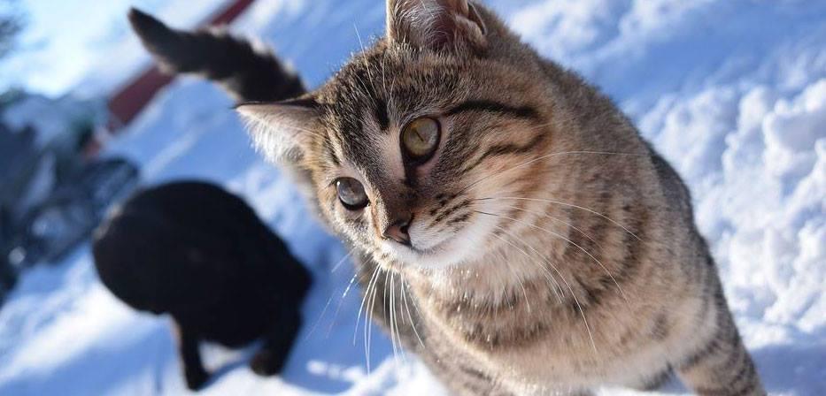 Prendre soin de son chat en hiver