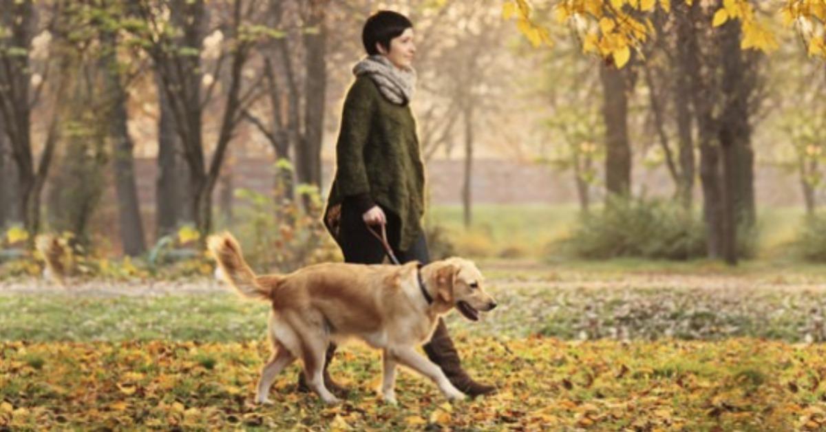 Promenades du chien