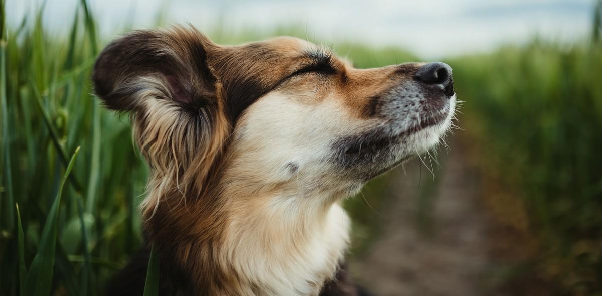 Prurito alle orecchie: ecco cosa vuole dirti il tuo cane