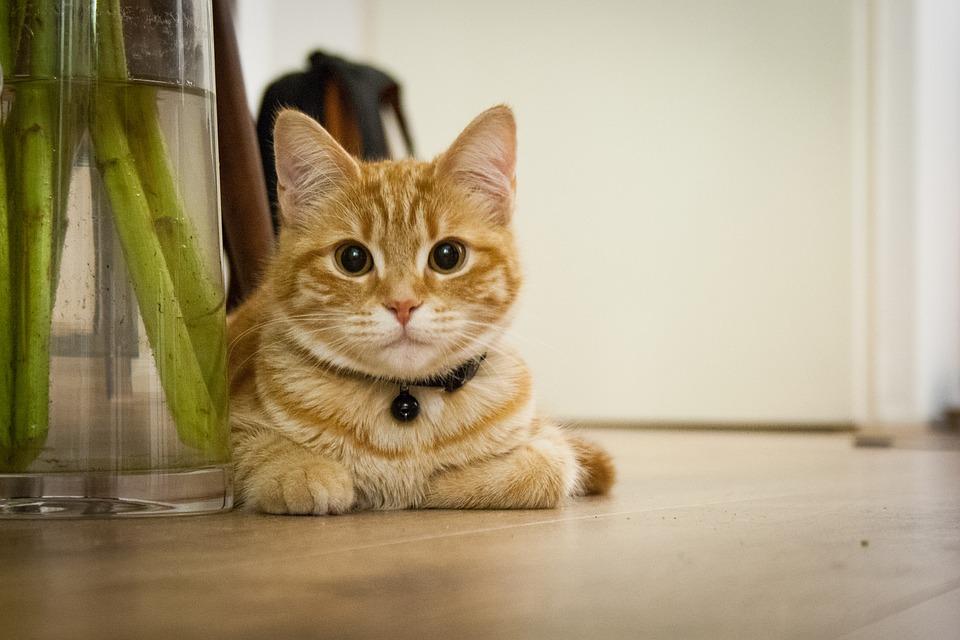 Rester seul, le chat