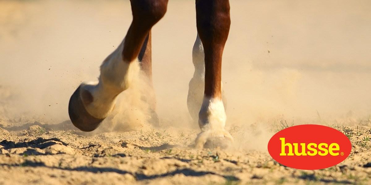 Le pied du cheval